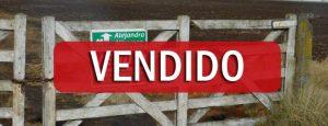 VENDIDO: 50 has en Puan