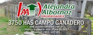 EN VENTA: 3750 has Campo ganadero
