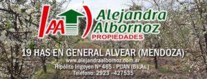EN VENTA: Finca de 19 has en General Alvear (Mendoza)