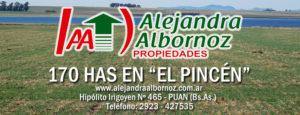 EN VENTA: 170 has en «El Pincén» (Puan)
